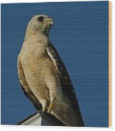 Eastern Red Shouldered Hawk Wood Print by April Wietrecki Green