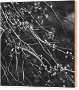 Eastern Redbud In Black And White Wood Print