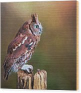 Eastern Screech Owl Red Morph Profile Wood Print