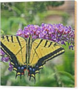 Eastern Swallowtail Wood Print