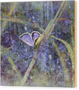 Eastern Tailed Blue Wood Print