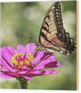 Eastern Tiger Swallowtail 2016-1 Wood Print