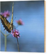 Eastern Tiger Swallowtail And Blue Sky Wood Print