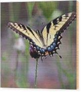 Eastern Tiger Swallowtail Butterfly In Garden 2016 Wood Print