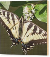 Eastern Tiger Swallowtail  Butterfly Wingspan Wood Print