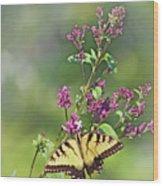 Eastern Tiger Swallowtail No. 4 Wood Print