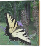 Eastern Tiger Swallowtail Sipping Nectar Wood Print