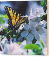 Eastern Tiger Swallowtail Wood Print by Thomas R Fletcher