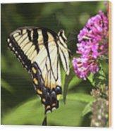 Eastern Triger Swallowtail Wood Print