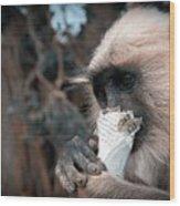 Eating Monkey Wood Print