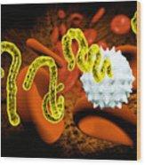 Ebola Virus Wood Print