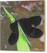 Ebony Jewel Damselfly Wood Print