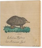 Echidna Hystrixder Ameisen-igel The Spiny Echidna In Neuholland Wood Print