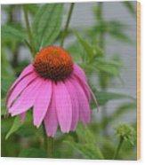 Echinacea 16-01 Wood Print