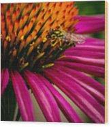 Echinacea And Syphrid Wood Print