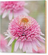 Echinacea Butterfly Kisses Wood Print