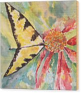 Echinacea Butterfly Wood Print