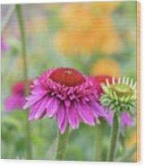 Echinacea Catharina Red  Wood Print