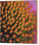 Echinacea Coneflower Abstract Wood Print