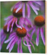 Echinacea Crowd Wood Print