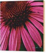 Echinacea IIi Wood Print