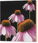 Echinacea In Half  Wood Print