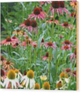Echinacea Multi Mix Wood Print