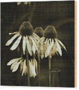 Echinacea Wood Print by Terrie Taylor