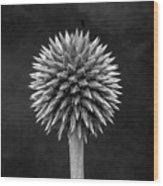 Echinops Monochrome Wood Print