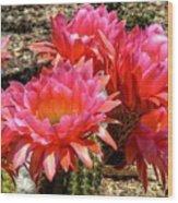 Echinopsis Flowers In Bloom II Wood Print