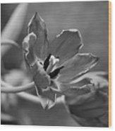 Echoes Of Past Glory Wood Print
