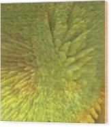 Eclosion  Matutina Wood Print
