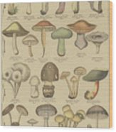 Edible And Poisonous Mushrooms Wood Print