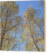 Edinburgh Birchwood Wood Print