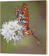 Edith's Checkerspot Five Wood Print