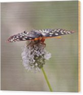 Edith's Checkerspot Four Wood Print