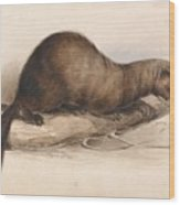 Edward Lear - A Weasel Wood Print