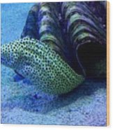 Eels Wood Print