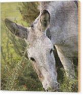 Eeyore Wood Print