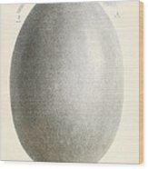 Egg Of Dinornis, Giant Moa, Cenozoic Wood Print