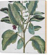Eggplant, 1735 Wood Print