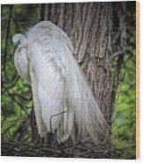Egret - 2679 Wood Print