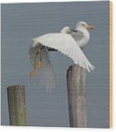 Egret 7 Wood Print