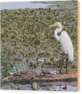 Egret And Turtles Wood Print