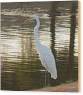 Egret At Waters Edge Wood Print