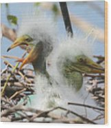 Egret Chicks In Nest With Egg Wood Print