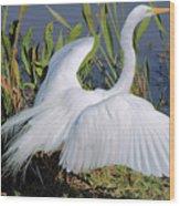Egret Display Wood Print