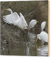 Egret Exit Wood Print by George Randy Bass