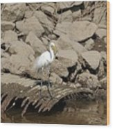 Egret Fishing Wood Print
