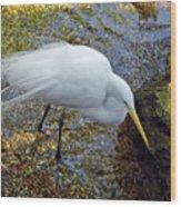 Egret Fishing Wood Print